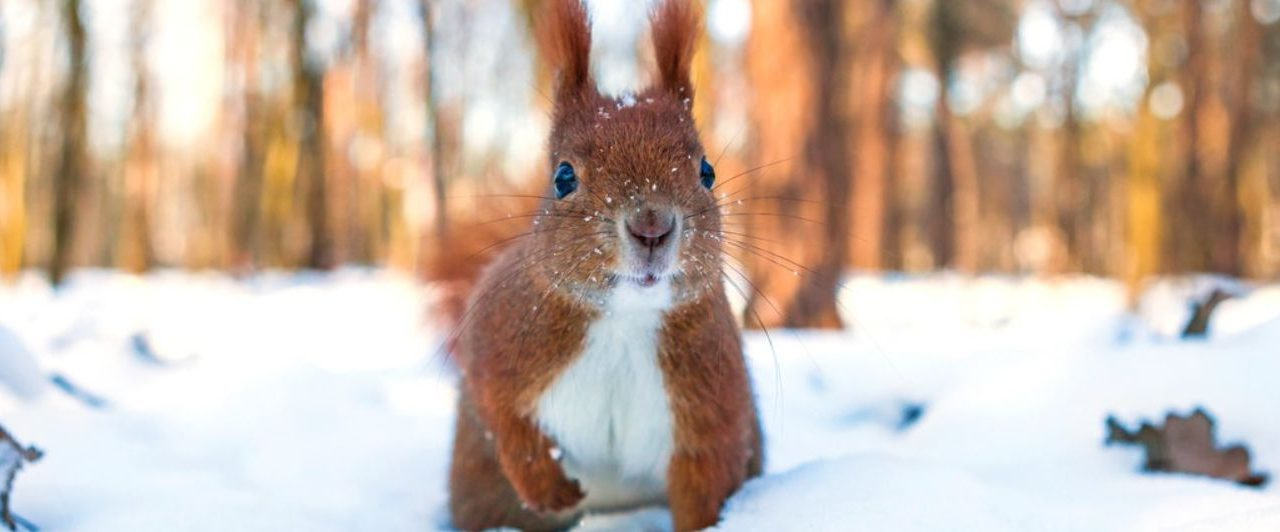 De les van de eekhoorn – waardevol werk