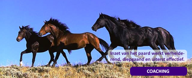 Protocollen en procedures in de paardenkudde