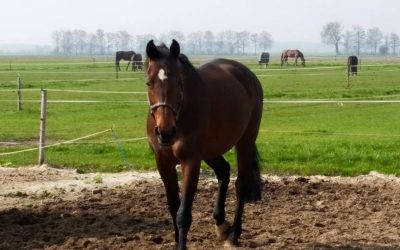 Open middag, (Basisvertrouwen/ paardencoaching/ CREF-methode) 17 april 2020