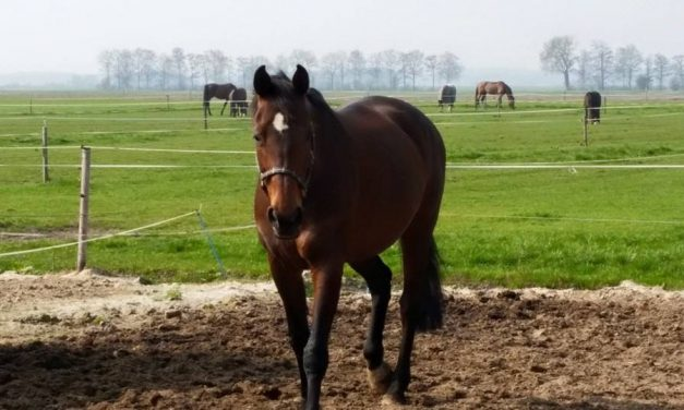 "Kennismaking ""Paardencoaching"", zaterdag 11 mei 2019"