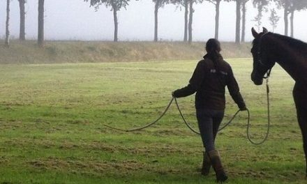 """Basiscursus """"Paardencoaching in de praktijk"""", start 20 juni 2018"""