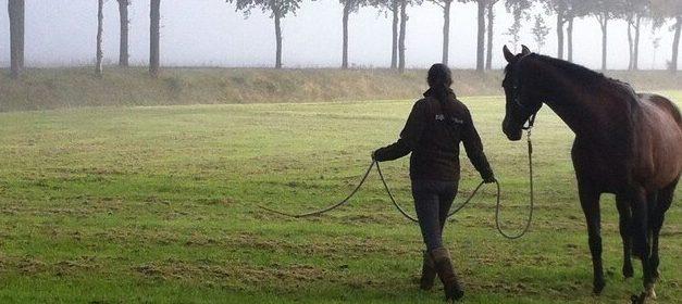 """Basiscursus """"Paardencoaching in de praktijk"""", start voorjaar 2021"""