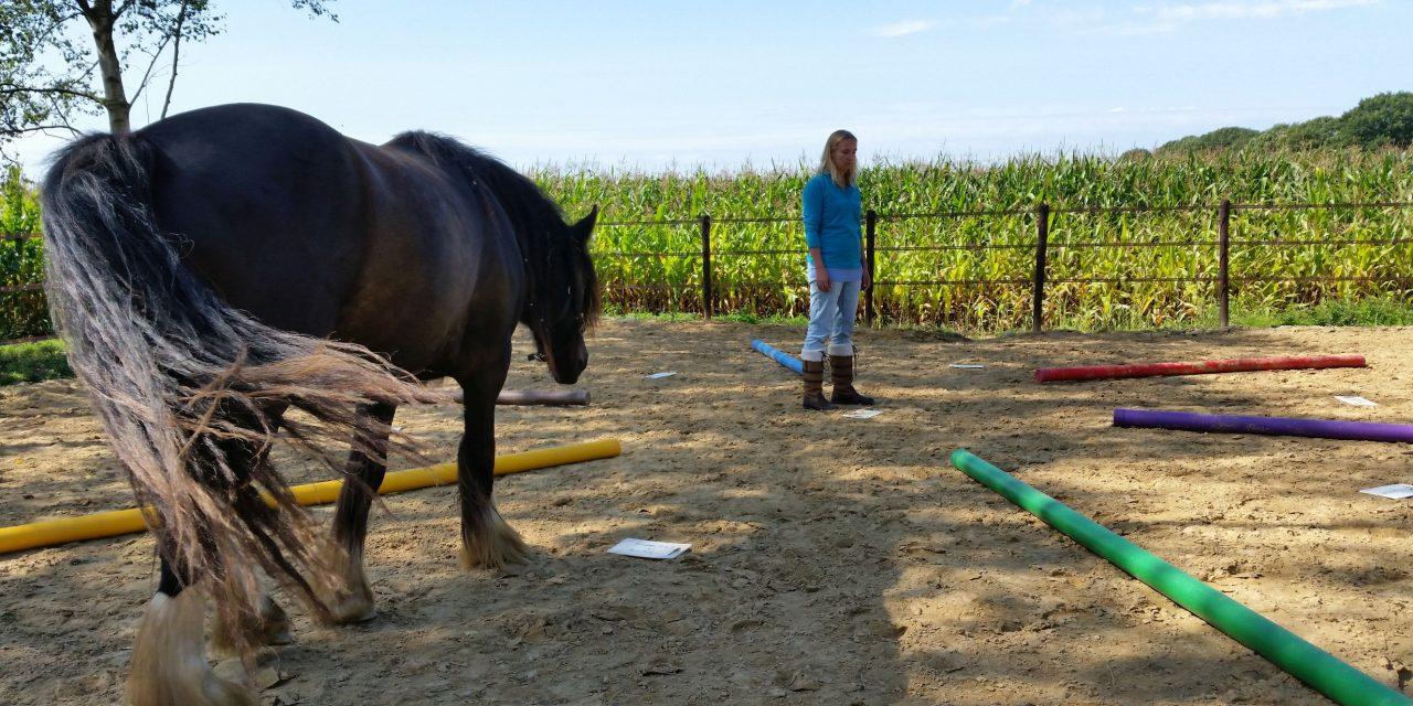 OPEN AVOND | Energiemanagement | Paardencoaching | CREF-methode, 3 september 2019