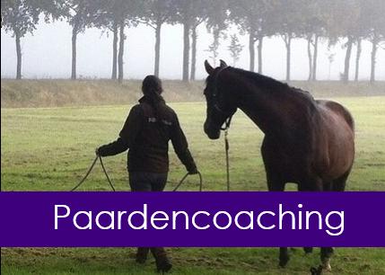 """Workshop """"Paardencoaching – De boodschap van het paard"""", vrijdag 10 september 2021"""