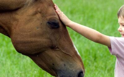 Psychotherapie ondersteund met paarden succesvol